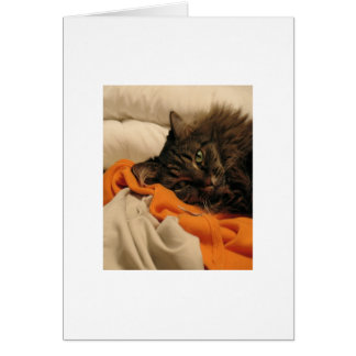 Tarjeta en blanco del naranja del gato