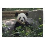 Tarjeta en blanco del oso de panda