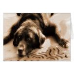 Tarjeta en blanco del perro del labrador retriever