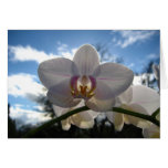 Tarjeta en blanco, flor de la orquídea
