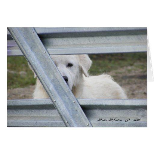 Tarjeta en blanco: Ojos del perro de perrito