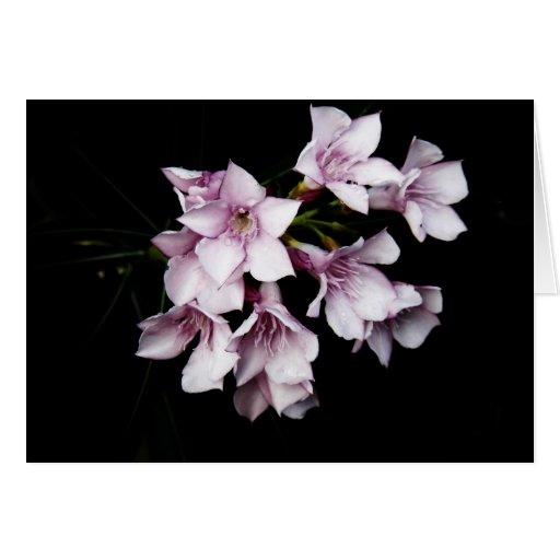Tarjeta en blanco - Oleander rosado