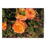 Tarjeta en blanco, rosas coralinos en Bush