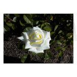 Tarjeta en blanco: Un color de rosa amarillo claro
