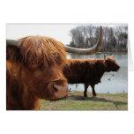 Tarjeta escocesa del ~ del ganado de la montaña