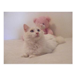 Tarjeta estropeada soñadora del gatito tarjetas postales