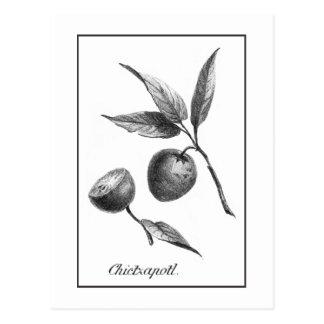 Tarjeta exótica de la aguafuerte de la fruta del tarjetas postales