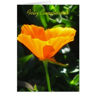 Tarjeta - Feliz Cumpleaños - Amapola de California Greeting Card