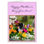 Tarjeta feliz de Boston Terrier de la abuela del d