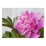 Tarjeta floral del peony de la flor rosada hermosa