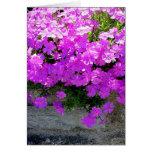 """Tarjeta floral en blanco del """"Phlox"""" -"""