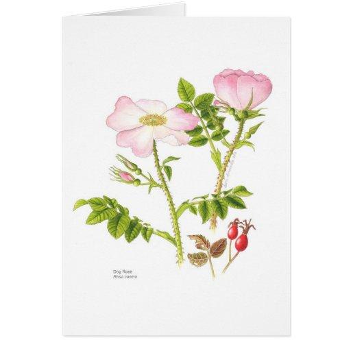Tarjeta floral en blanco - rosa de perro
