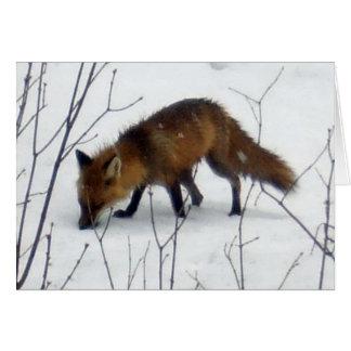 Tarjeta Fox-En blanco