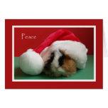 Tarjeta fresca del conejillo de Indias del navidad