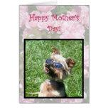 Tarjeta fresca feliz de Yorskshire Terrier del día
