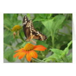 Tarjeta gigante de la mariposa de Swallowtail