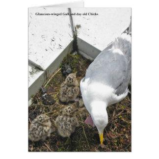 tarjeta Glauco-coa alas de la familia de la gaviot