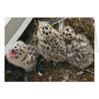 tarjeta Glauco-coa alas de los polluelos de la gav
