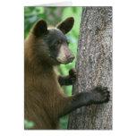Tarjeta grande de los oídos de Cub de oso