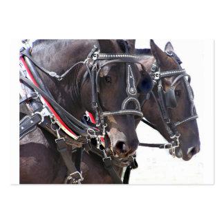 Tarjeta grande del perfil de los caballos tarjetas de visita