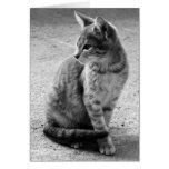 Tarjeta gris del gato