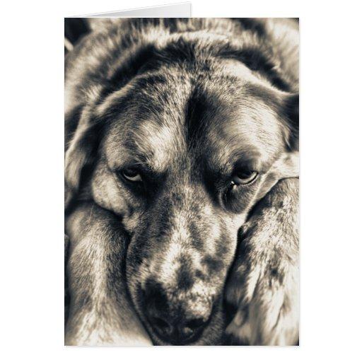 Tarjeta gruñona del perro