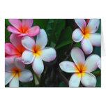 Tarjeta hawaiana de la flor