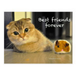 Tarjeta linda de los mejores amigos del gato de lo tarjeta postal