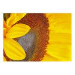 Tarjeta macra del perfil del girasol plantilla de tarjeta de negocio
