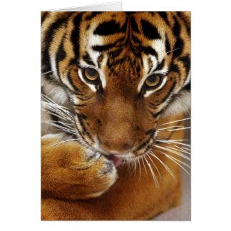 Tarjeta malaya del tigre #1