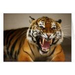 Tarjeta malaya del tigre #2