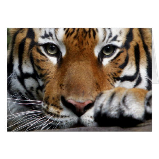 Tarjeta malaya del tigre 3