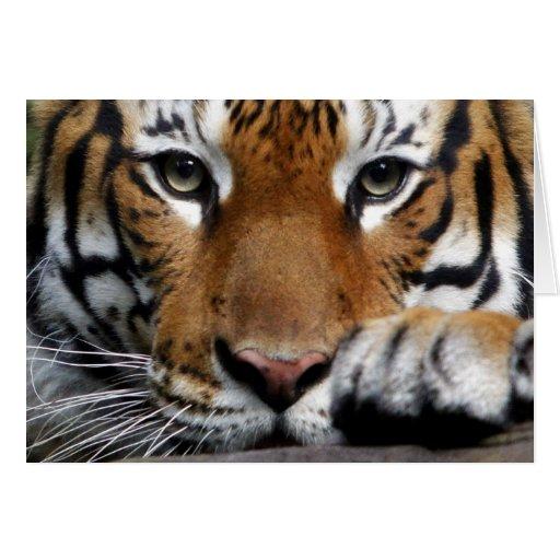 Tarjeta malaya del tigre #3