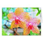 Tarjeta manchada de las orquídeas