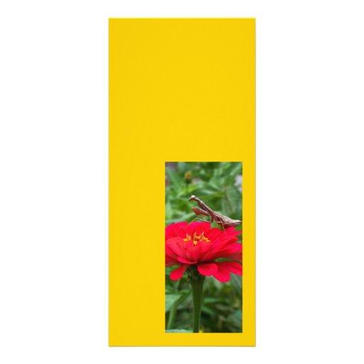 Tarjeta/mantis religiosa del estante tarjetas publicitarias personalizadas