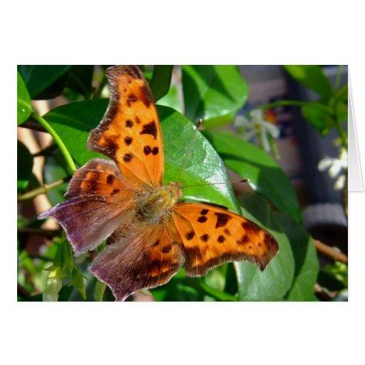 Tarjeta muerta de la mariposa de la hoja