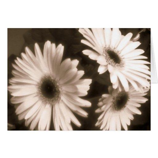tarjeta negra de la flor blanca