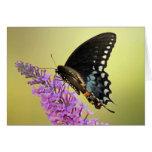 Tarjeta negra de la mariposa de Swallowtail 5x7 de