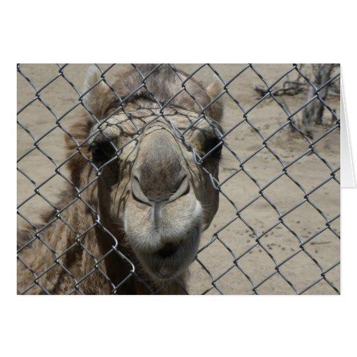 Tarjeta Nosy del camello