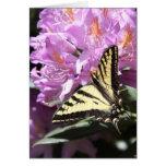Tarjeta occidental amarilla de la mariposa de Swal