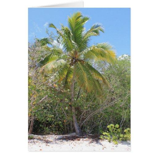 Tarjeta perfecta del Palm Beach