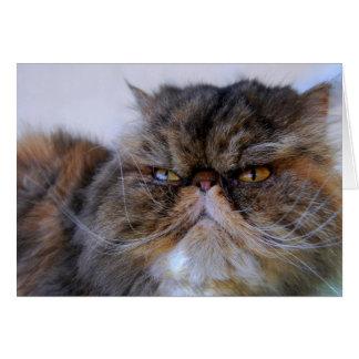Tarjeta persa del gatito del calicó orgulloso