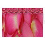 tarjeta--pétalos color de rosa