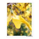 Tarjeta postal - Belbe flor