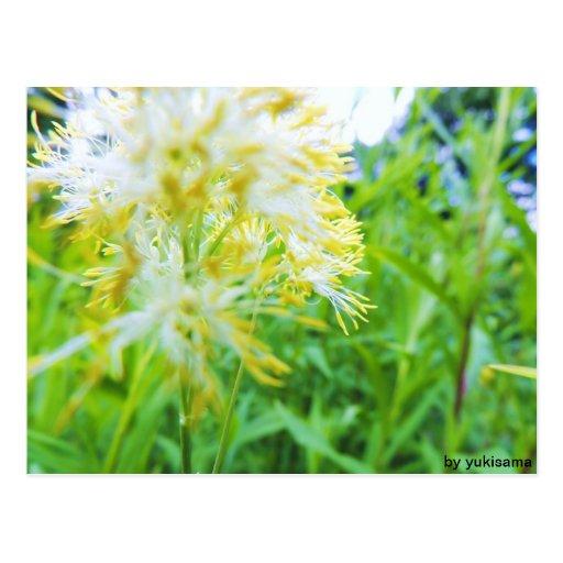 Tarjeta postal - flor Amarilla