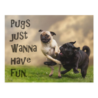 "Tarjeta postal ""Pugs justamente wanna have fun """