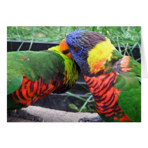 Tarjeta Preening de Lorikeets del arco iris