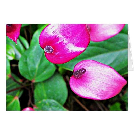 Tarjeta púrpura de Tailflowers