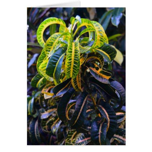 Tarjeta rizada de la planta tropical