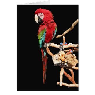 Tarjeta roja del Macaw para cualquier ocasión